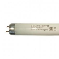 Лампа ЛД-36 OSRAM L36W/765